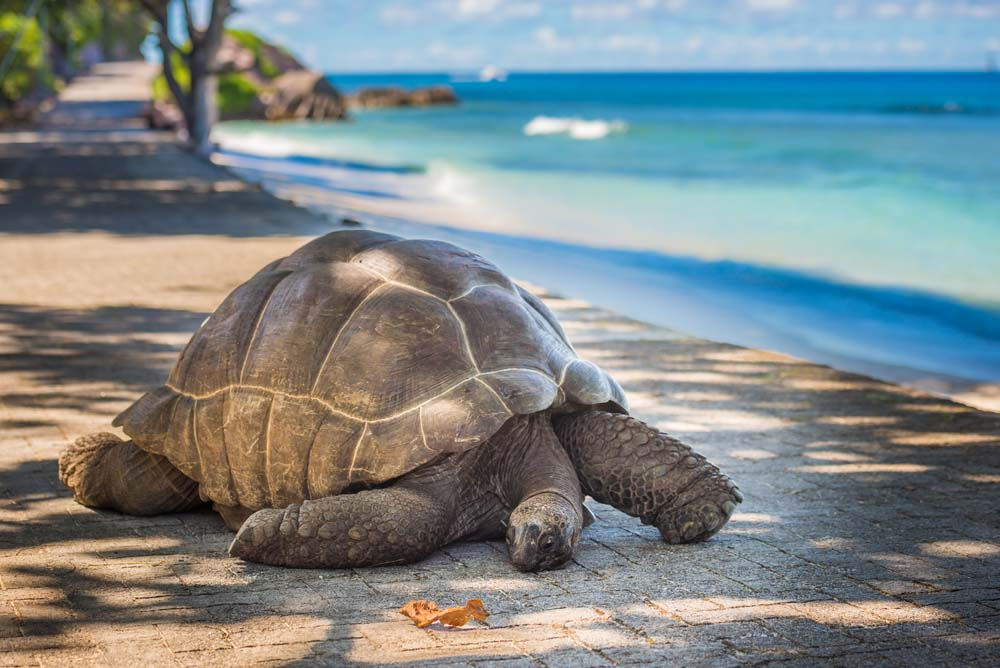 Seychellen 3