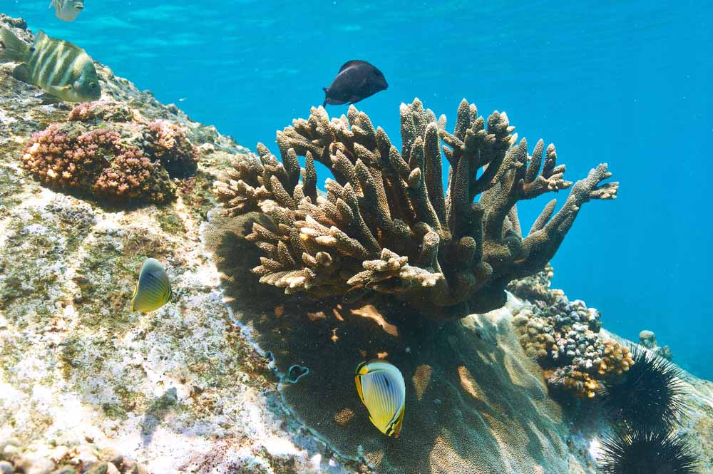 Seychellen 7