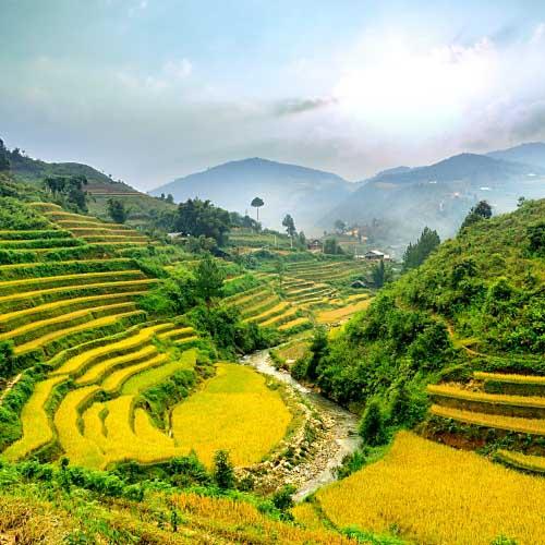rijstvelden-grid